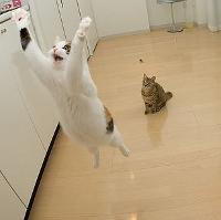 leapingcat